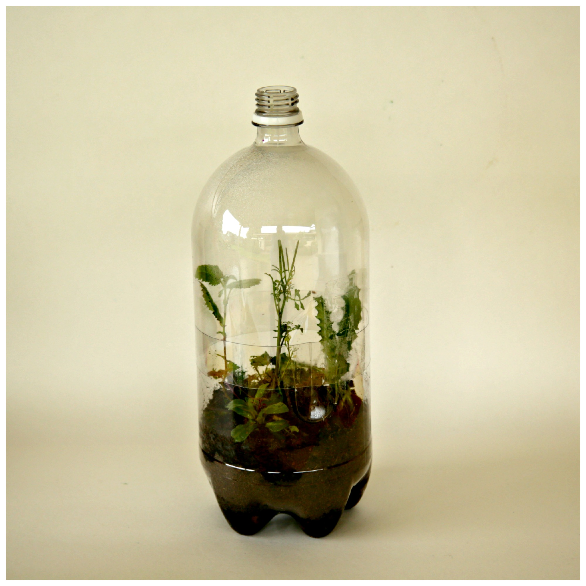 6 earth day crafts from recycled materials kix cereal earth day craft recycled soda bottle terrarium ccuart Images