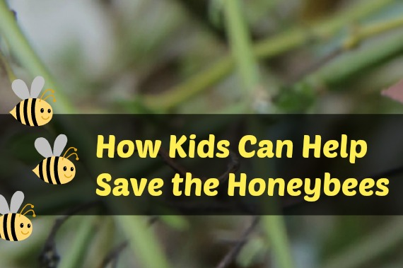 How Kids can help save the honeybees